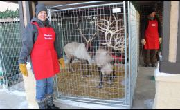 """We have a small herd of reindeer that we keep, and pamper, as pets. We absolutely adore these animals,"" said the Bluestem Reindeer Ranch team."