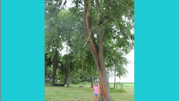 Imagine 15 million volts of electricity hitting a tree. The most likely result? The heat travels through the tree, vaporizing its sap and creating steam that causes the trunk to explode. Erika Wells stands by the tree that was struck by lightning.