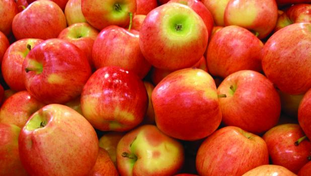 See apple recipes on page 4 in this week's issue.
